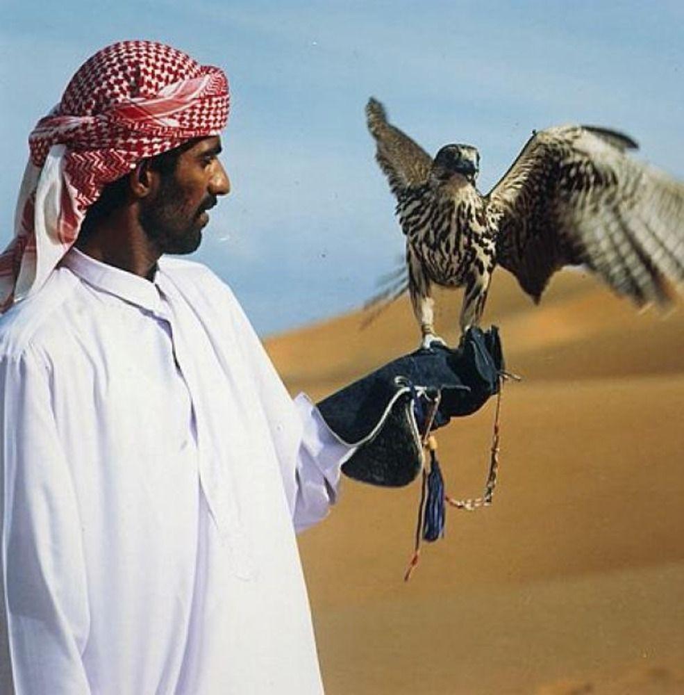 Исмаил Шангареев - Соколиная охота в ОАЭ