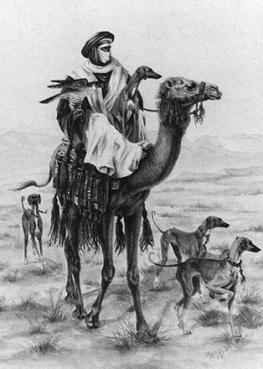 Исмаил Шангареев - Соколиная Охота в ОАЭ (2)