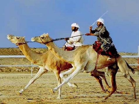 Исмагил Шангареев: верблюжие бега