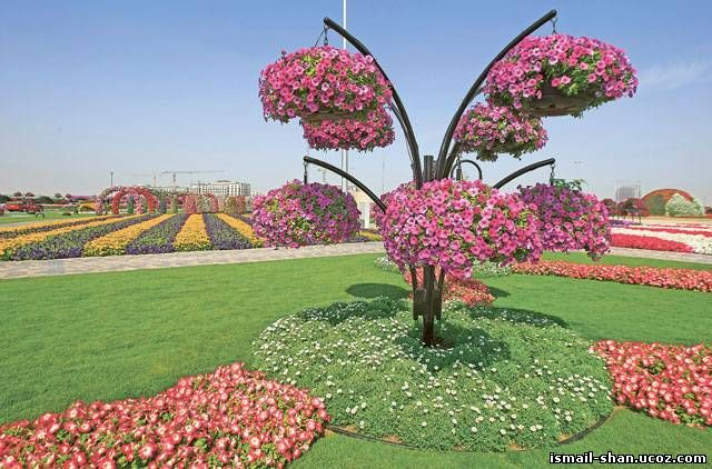 Шангареев Исмаил - Цветочный Парк в ОАЭ